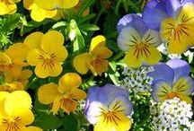 Gardening (flowers)