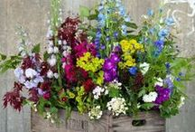 Gardening (container flowers)