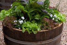 Garden Design (Veggie)