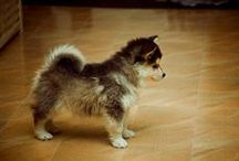 Favorite Dog Breed / by Jorja Hale King