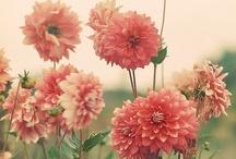 Blooming Beauties / by Sarah Havel