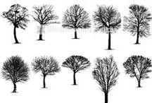 DRAW   trees  / by Vivian Mavrogianni