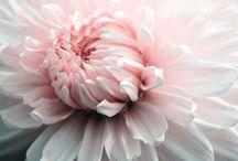 BLOOMING / by Corinna Pidgeon