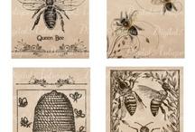 Vintage/Antique cards