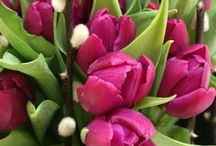 Tulips: My Favorite Flower / I've had love affair with tulips forever. I plant them fresh each year to have a new color story the next season!