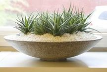"""Succulents AND Terrariums / """"Small Gardening"""" : whether in size of plants or the container!"""
