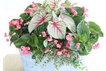 Gardening: in Containers / Take a look at my collection of container garden ideas: both for summer and for winter.