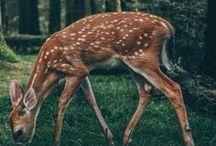 ✧ animals ✧