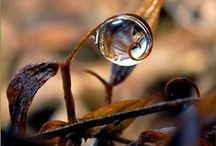 Nature at it's finest  / by kc & Droc Macnamara