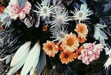 Blooms / by Samantha / Could I Have That