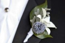 Boutonnieres / by Catherine Hall Studios