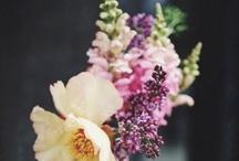 Floral / by Alex Steele