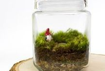 Terrariums / Bonsai / Mini Gardens / Home and Garden  Decor with Live Moss and Miniature Plants  glass or pottery containers