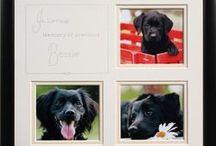 Pets / Custom framed pet photos and art.