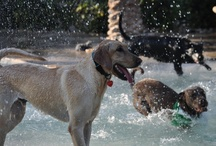 Barkerita Bay Doggie Day Camp / No need to leave your best friends home alone.  Let them enjoy the day with us!   The will have full access to Barkertia Bay's pools and Bark Park area.