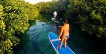 SUP in a wild cenote / Discover a cenote and introduce yourself into paddle boarding, this is the perfect tour in Tulum.