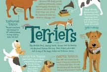 Beatrix and Midge Co. Dog Breed Infographics / Celebrating dogs of different breeds and the weird facts that make them so much fun!