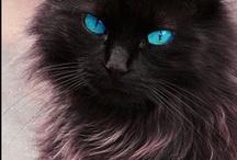 Cats...Big cats, small cats,  cats cats cats / by Terry Walker
