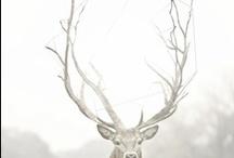 Bears and Deer (Pandas,Polar, Koala's) ( Caribou, Moose, Elk) / by Terry Walker