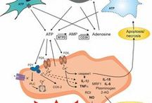 Brain-Immune Interactions / Neurohormonal-immune interactions and their implications for health and disease