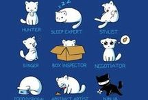 Kitty Cat / All about kitties <3