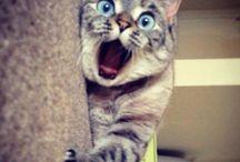 Cats / I want them!