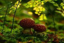 Fungi and Fauna