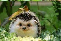 Kawaii  / #cute #animals #kawaii #sweet #babies  #tiny #miniature