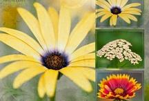 Photography ~ Macro / The beauty up close!