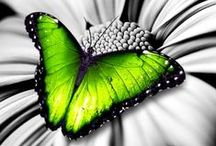 Photography ~ A Splash of Color / Black and White photography with a twist of color!