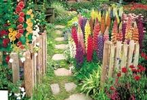 Boho garden & green