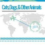 Cats, Dogs, and Other Animals / All About Animals