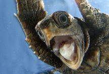 ~ Turtles ~ / Turtle Love  / by Turtle Shoaf 🐢