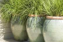 Container Gardens / by Ms Monette .