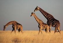 Namibia / by Ingrid Els