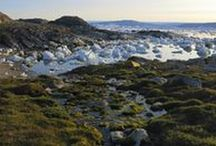 TREKKING / Untouched nature, quietness, the softest moss mattress with scenic panoramaviews to fjords and icebergs