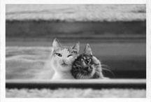 furry friends / by Jennifer Brocato