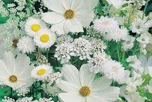 Garden Delights / by Maura K. Burns