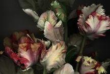 Flowers / by Ana Requião