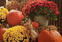 Fall - Hall'O'ween & Thanksgiving! / Seriously LOVE this time of year! Leaves turning, cool crisp days, giggles of trick or treaters, warm yummy smells coming from the kitchen, giving of thanks with those you love! Ahhhh, Love everything about it! :-) / by Brittny Ramirez