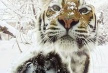 Cute cute cute / For the love of fuzz and lots of tigers