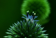 Green with Envy / by Maureen Mitchell
