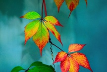 Autumn / by Maureen Mitchell