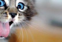 Kitten love! / by Cayla Hale