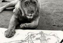 animal perspectives in art