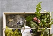All Sorts of Crafty / ~ make it yourself ~ / by RachelWolf {Clean. LuSa Organics Blog}