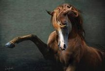 Equine Amazement / by Karla Fountain