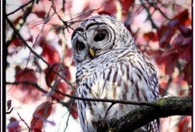 What a Hoot / by Brittany Chase