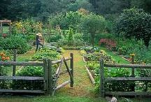 veggie patch / all things home grown and delicious / by Pia Baerg