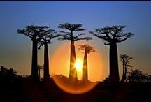 Viajes Madagascar / Nuestras propuestas de viajes y rutas a Madagascar Ver más: http://goo.gl/FmZFcv
